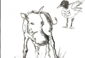 2010-E810 Phacochre et canard -Encre de chine aquarelle