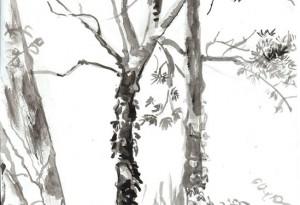2010 - E819 - arbre